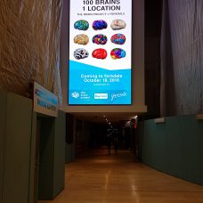 5.2mm indoor LED screen by Media Resources in Toronto's Yorkdale mall